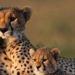african-safari-guide