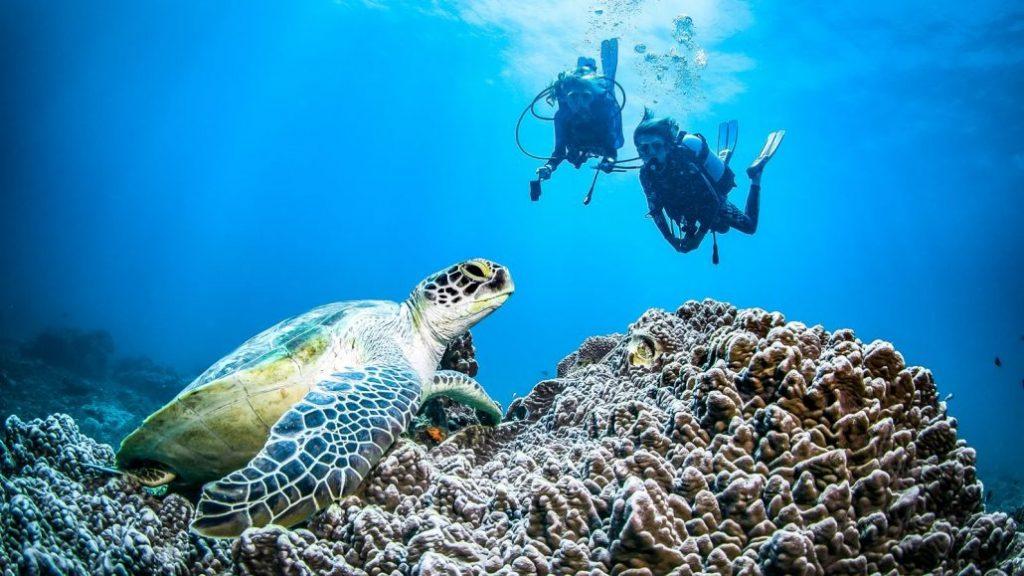 Scuba Diving in Kenya