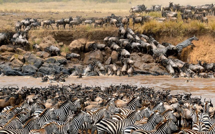 Annual Wildebeest Migration